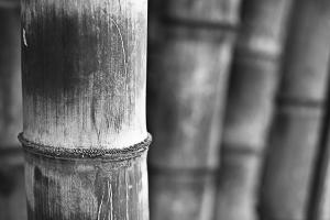 Abstrato/Bambu