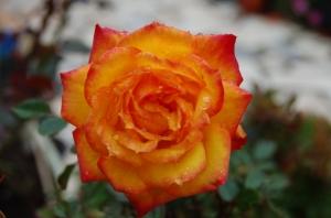 Outros/Esta flor que me encanta