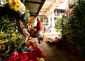 Gentes e Locais/taking care of my flowers