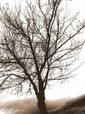 """/""""Árvore-Inverno"""""""
