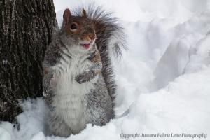 /A pose do esquilo