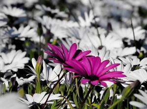 Outros/ 3 Flores para 3 Amigas