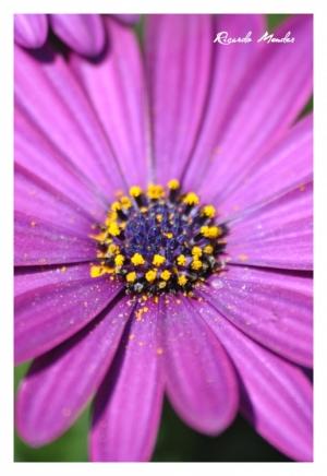 /Purple Flower IV