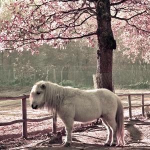 /My Little (Magic) Pony