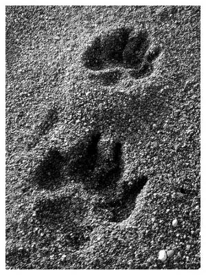 Outros/Pegadas na areia....