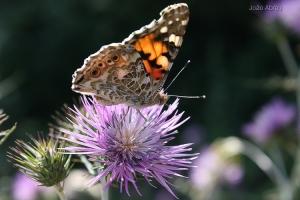 Animais/Apenas uma... borboleta