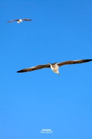 /... voando no imenso azul ...