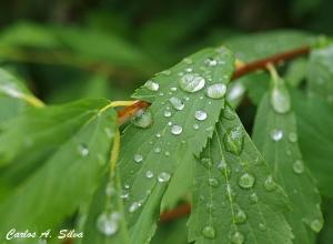 Outros/O rasto da chuva