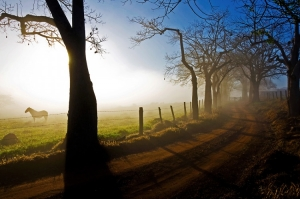 Paisagem Natural/O Cavalo e a Neblina