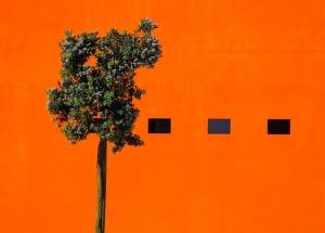 Abstrato/a forma a cor e o arbusto