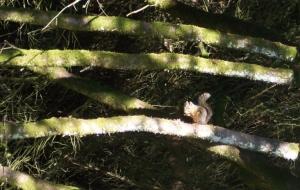 /Beautiful Squirrel