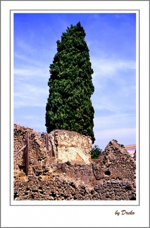 /A árvore e seu pedestral