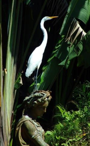 /garca branca na estatua