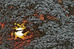 Paisagem Natural/A Paineira e o Sol