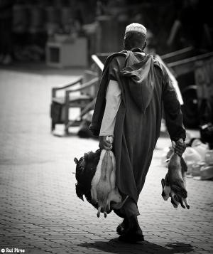 Fotojornalismo/Terras de Alah