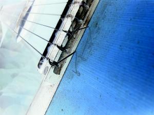 Abstrato/Viola azul