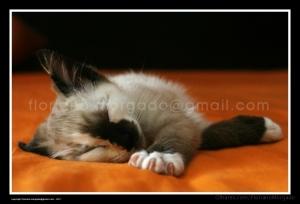 Animais/Serenidade felina
