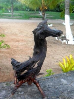 Outros/Cavalo Marinho Terrestre.