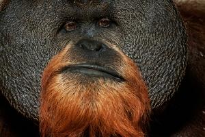 Animais/Imagens do Mundo Animal - Golias