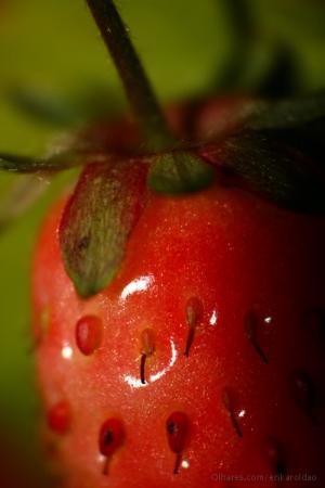Macro/Strwaberry 2