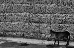 Fotojornalismo/O burro e o muro