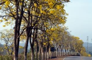 Paisagem Natural/Na estrada