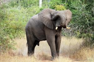 Outros/Elefante - Kissama