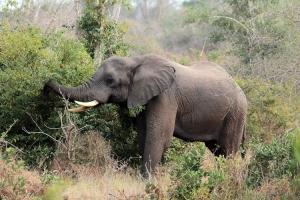 Outros/Elefante Kissama