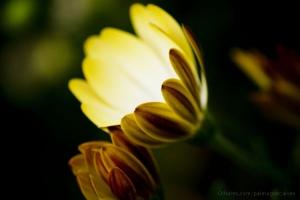 Macro/Flor luminosa.