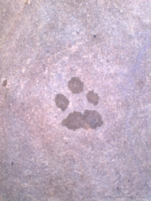 Animais/Pegada de gato