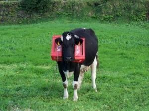 Outros/vaca
