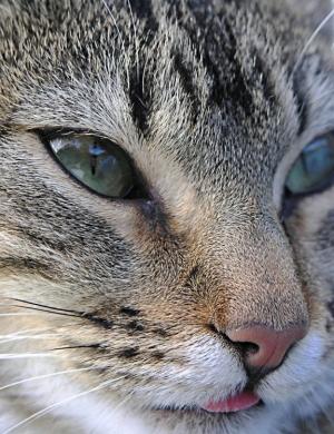 /Kitty 2