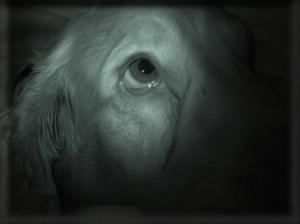 Animais/homenagem ao meu amigo gaspar