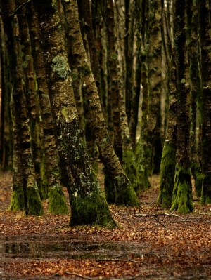 Paisagem Natural/Floresta Encantada