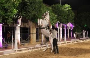 Outros/cavalo andaluz