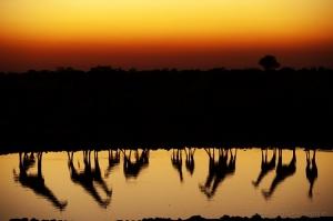 /Entardecer em Okaukuejo, Parque Etosha, Namíbia