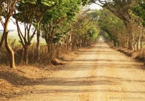 Paisagem Natural/Entrada Fazenda Morro Azul