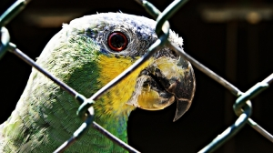 Outros/Papagaio