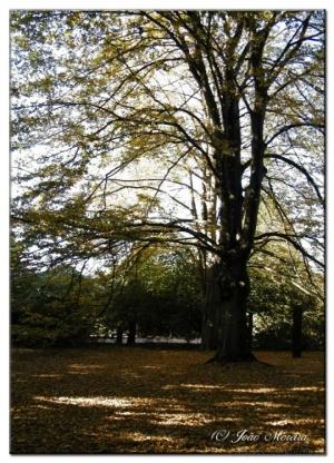 Paisagem Natural/Espaços de Outono