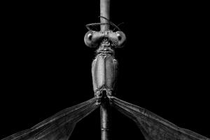 Macro/Simetria