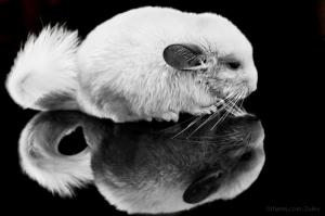 Animais/Eu e o outro