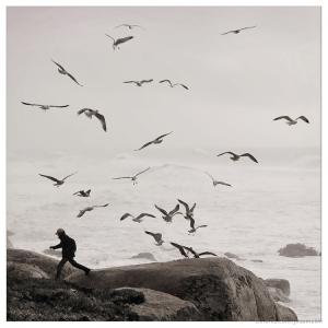 Outros/Os pássaros