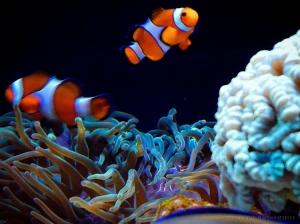 Paisagem Natural/Finding Nemo   Procurando Nemo
