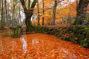 Paisagem Natural/Outono no Gerês...