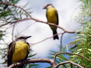 /Pássaros.