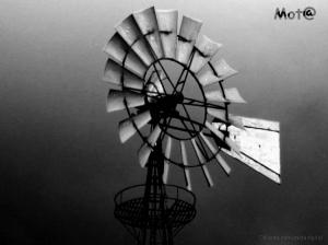 Macro/movido a vento