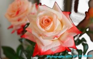 Outros/a rosa