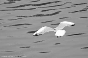 Outros/Voar contra a maré...