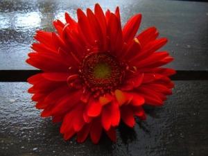 /Bouquet