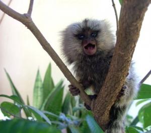 /Que mico!